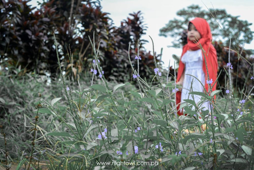 Little-Red-Riding-Hood-by-NightOwl-Digital-Photography-and-Designs (2)